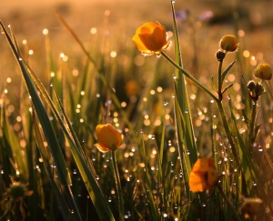 Diamonds at Dawn - BBC Countryfile Calendar Winner.